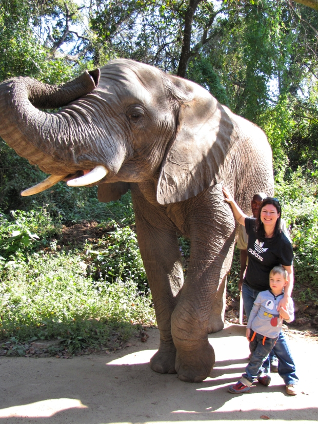 elefants10