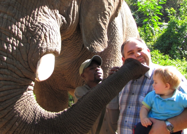 elefants11