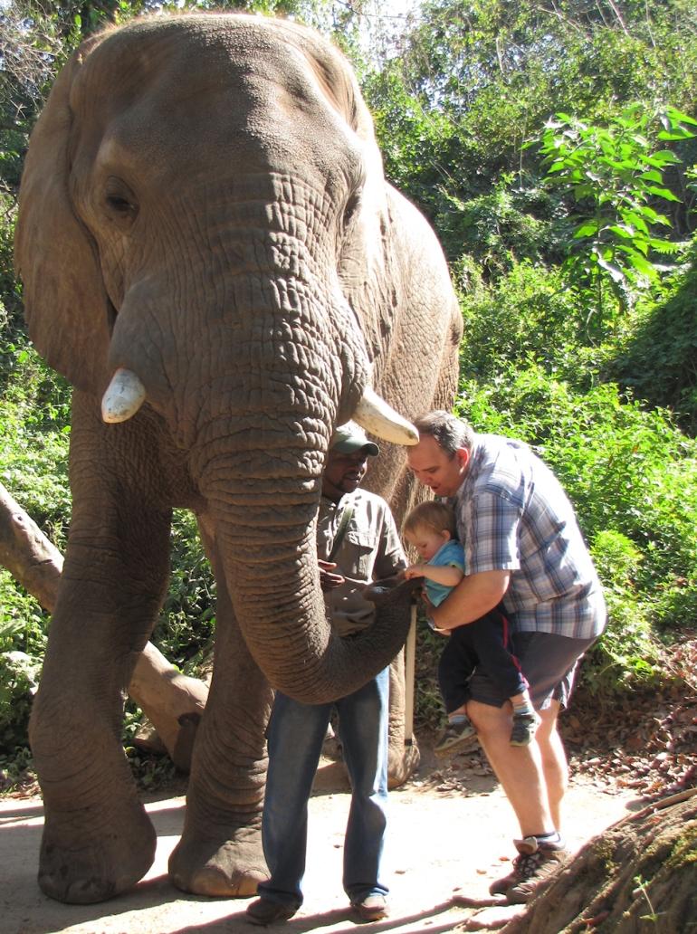 elefants12
