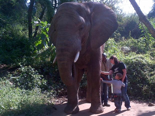 elefants4