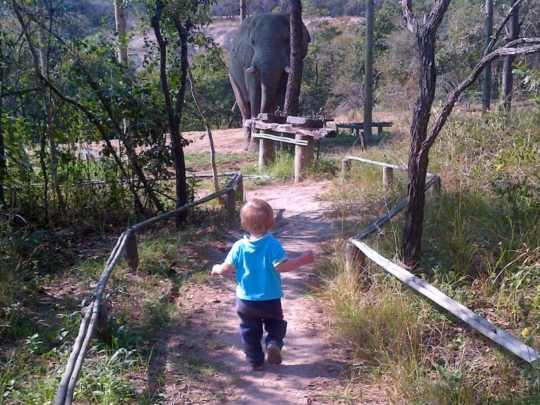 elefants6